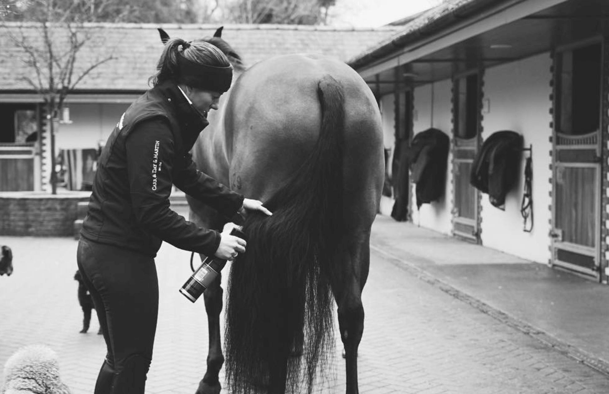 Pleje af hesten