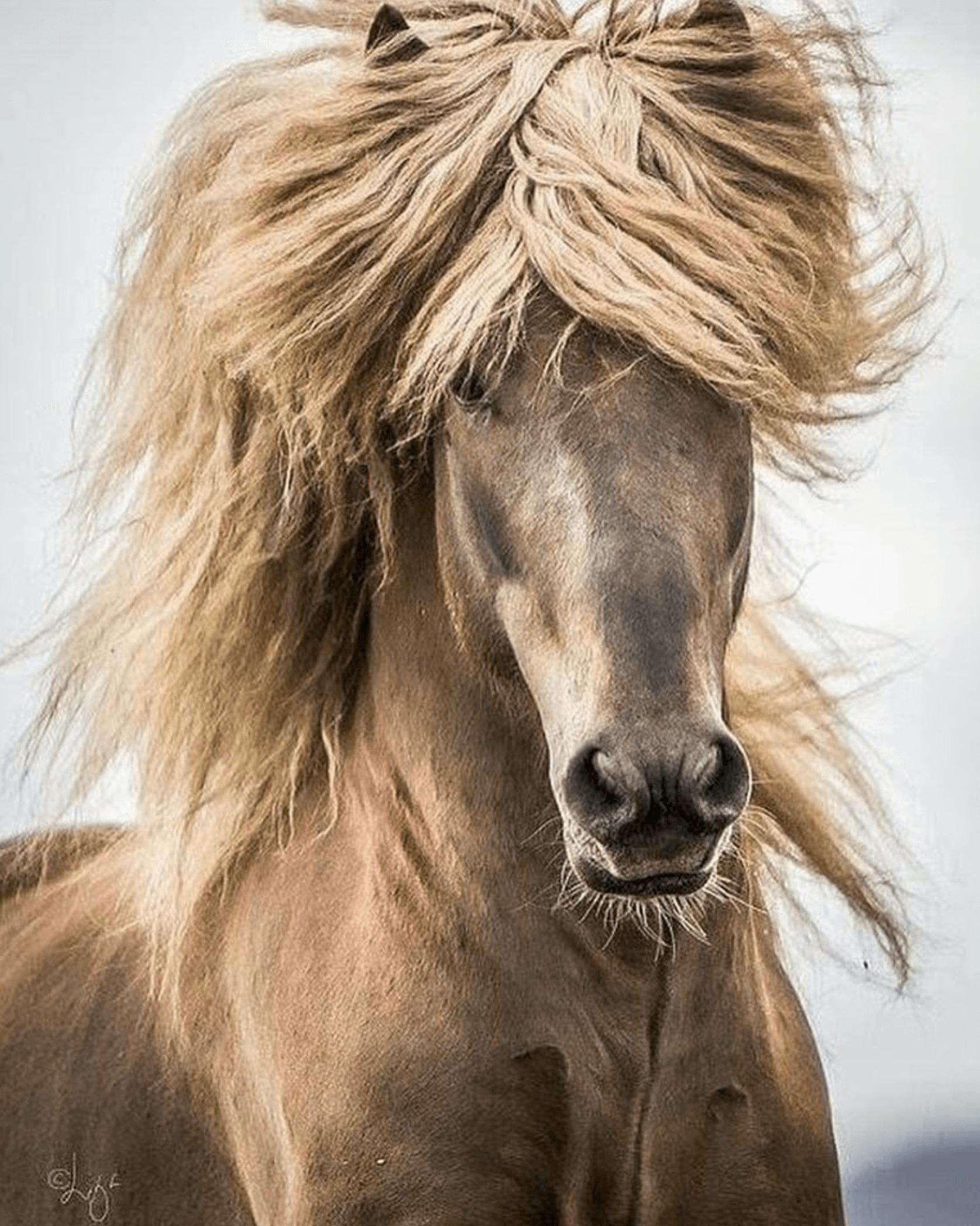 Pleje til hesten